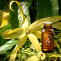 Ylang Ylang Oil - 1/2 Ounce
