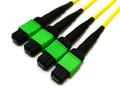 4x MTP/MPO to 4x MTP/MPO Plenum Trunk Cable
