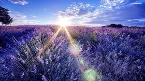 lavender-sleep-mask.jpg