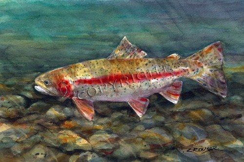 """DESCHUTES RAINBOW"" limited edition signed and numbered rainbow trout fish print from an original watercolor painting by Dean Crouser. Edition limited to 400 prints."
