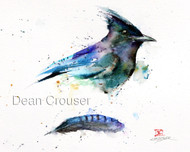 STELLER'S JAY & FEATHER