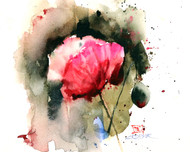 """EVENING POPPY"" flower art from an original floral watercolor painting by Dean Crouser. Available in a variety of products including signed and numbered limited edition prints, ceramic tiles, greeting cards and more!"