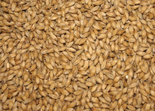 Malted Barley picture