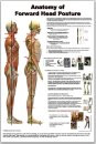 Anatomy of Forward Head Posture Poster