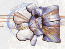 FREE - Anatomy Art Screensaver
