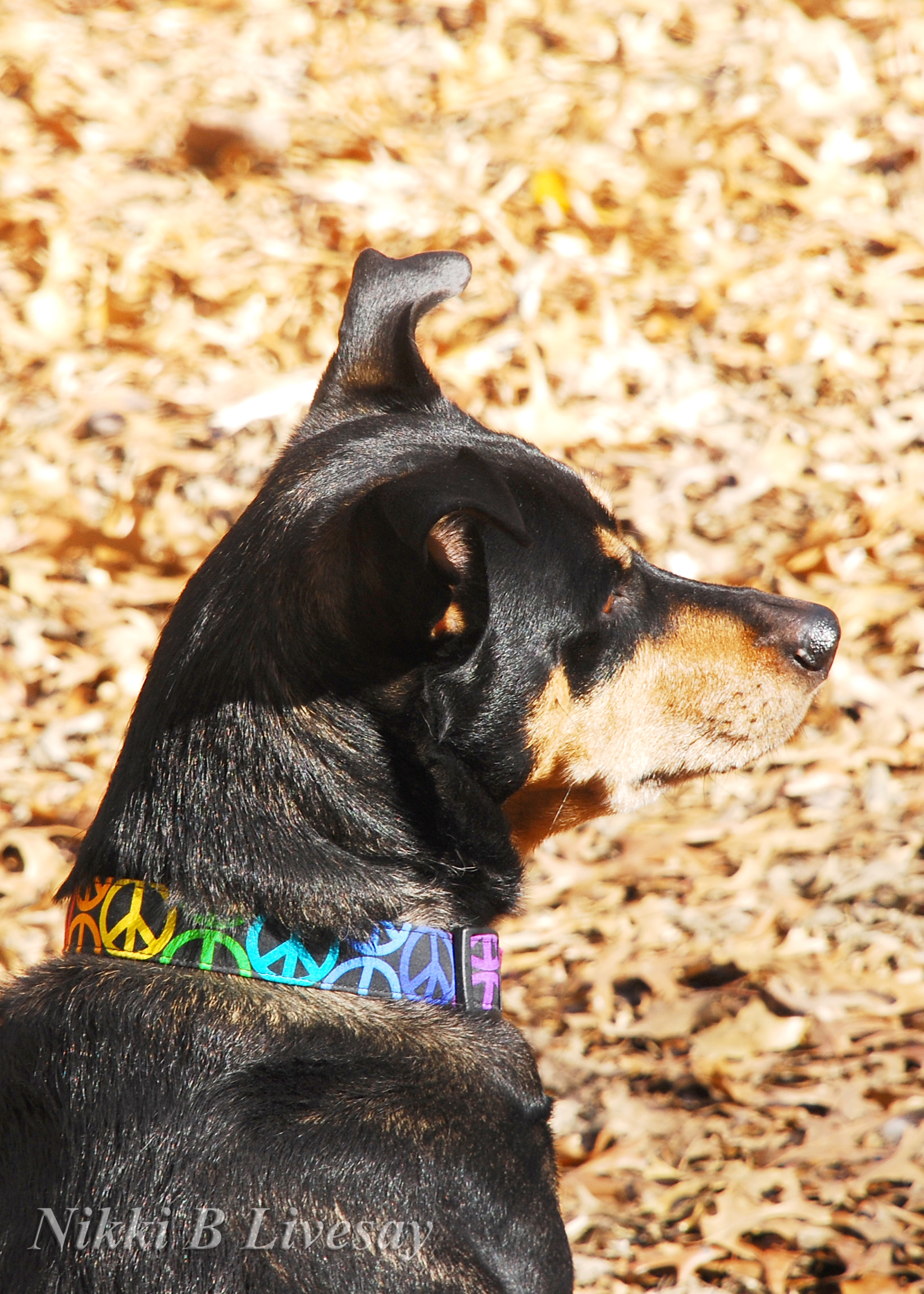 x-ny-peace-collar1-w-nikki-b-watermark-copy.jpg