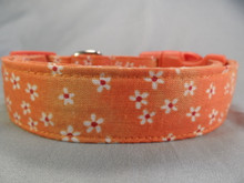 Little Daisy Flowers on Orange Dog Collar Rescue Me Collar