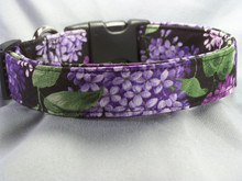 Lilacs on Black Dog Collar