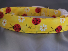 Red Ladybugs on Yellow Dog Collar rescue me dog collar