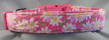 Daisy Flower on Hot Pink Dog Collar