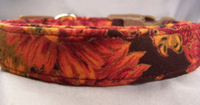 Colorful Fall Mums Dog Collar