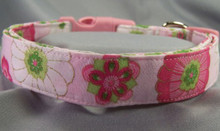 Bright Pink Flowers on Light Pink Dog Collar