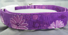 Daisies on Purple Seersucker Dog Collar