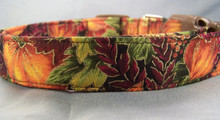 Autumn Pumpkins Dog Collar