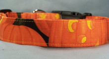 Large Pumpkin Faces on Black Dog Collar