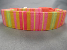 Orange Sherbert Stripe Dog Collar