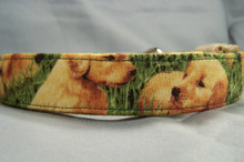 Golden Retriever Puppy Dog Collar