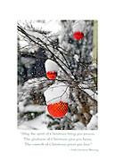 May the spirit of Christmas Card
