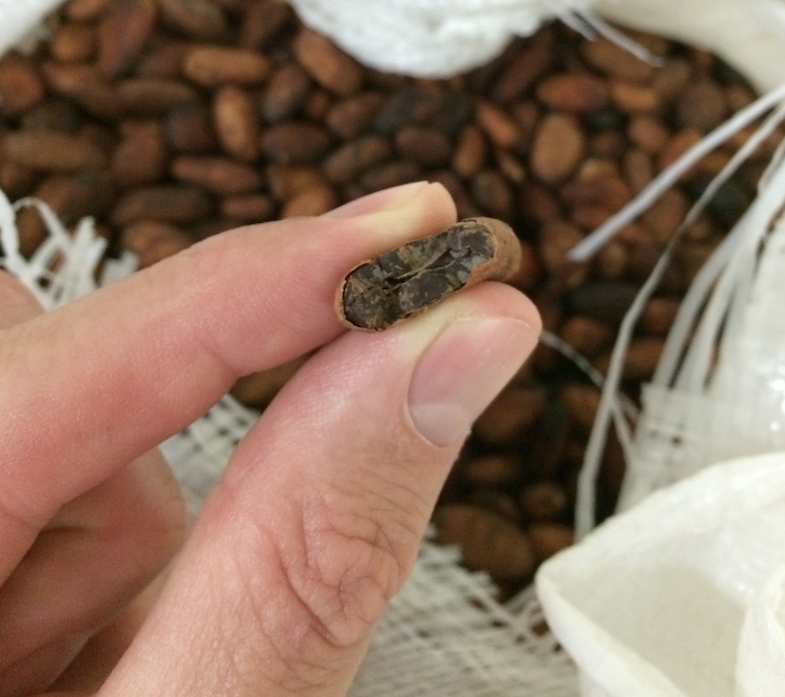 bulk-wholesale-cocoa-and-cacao.png