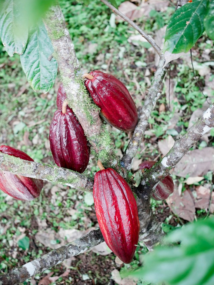 couverture-chocolate-comes-from-organic-cacao.jpg