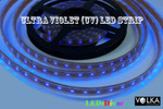LED Strip SMD 5050 30pcs/m Ultraviolet (UV) Waterproof 7.2W/m 12V