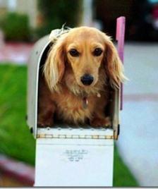 dog-in-mailbox.jpg