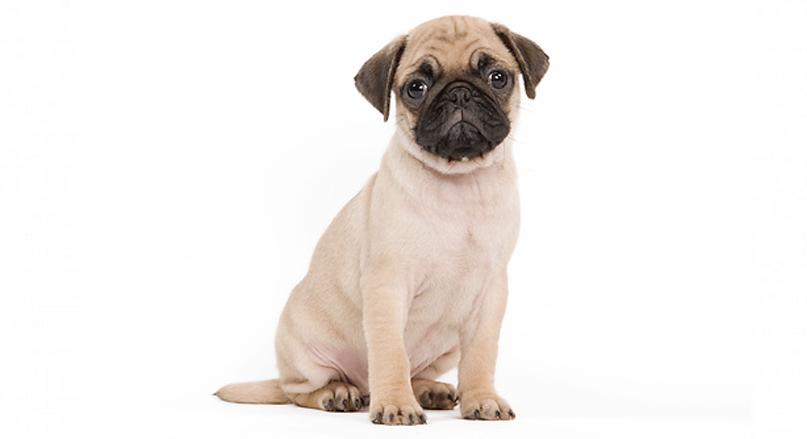 smalldogs.jpg