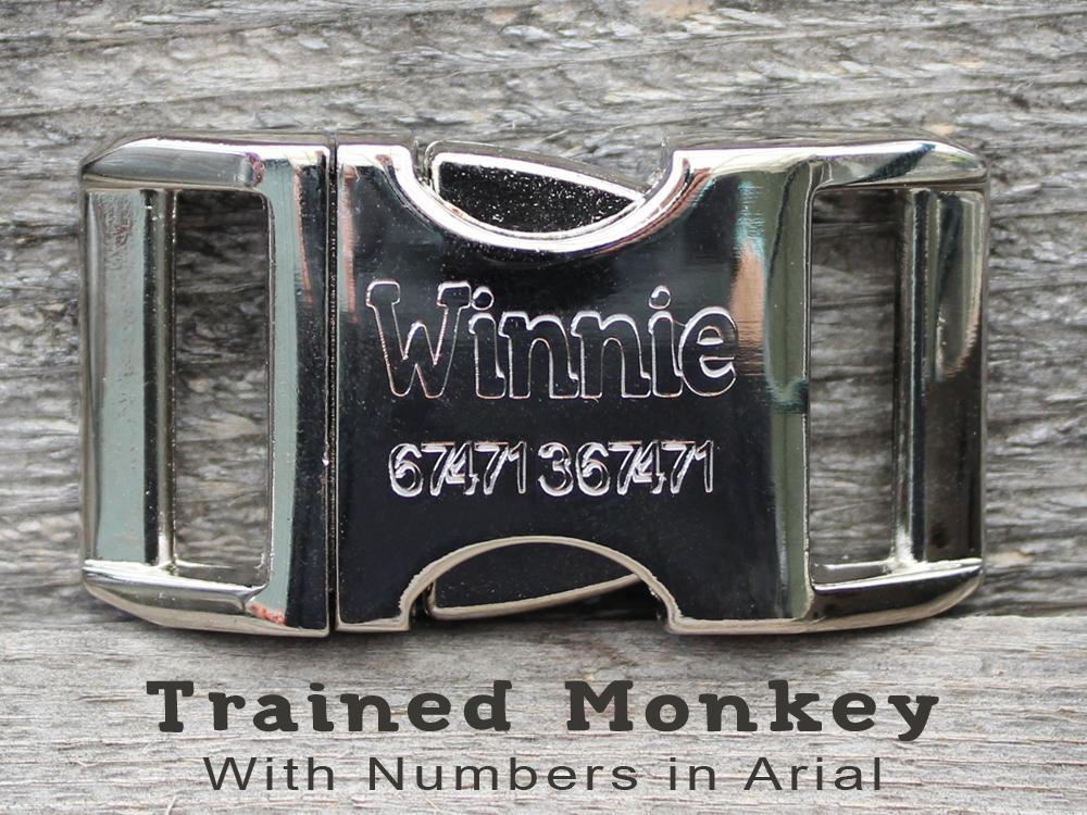 trainedmonkeytype.jpg