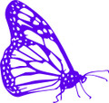 """Wall Decals and Stickers –  Butterfly"""""""