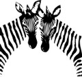 Wall Decals and Stickers - Two Zebras Design