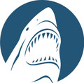 Wall Decals and Stickers - Shark