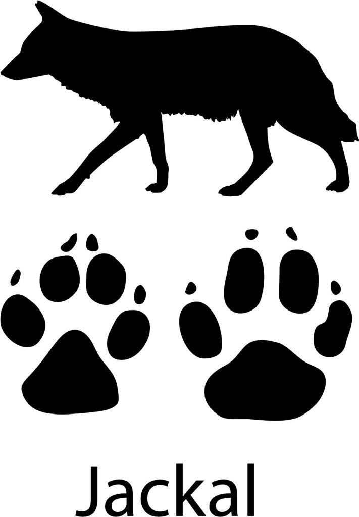 Jackal With Paw Print Wall Decal Online Animal Vinyl Decals