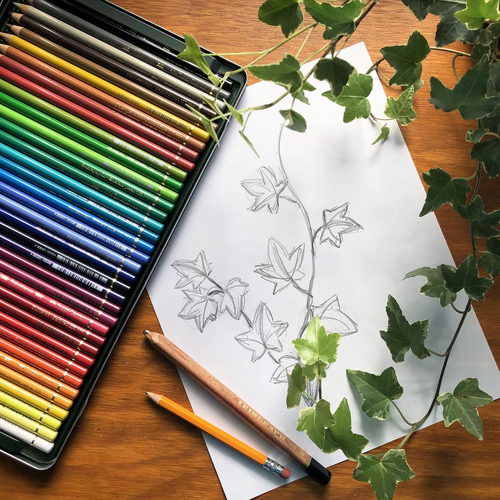 plant-workshop-ivy-sketch.jpg