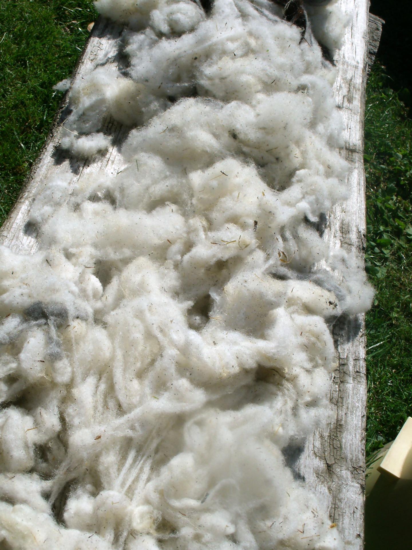 raw-wool-699950-1920.jpg