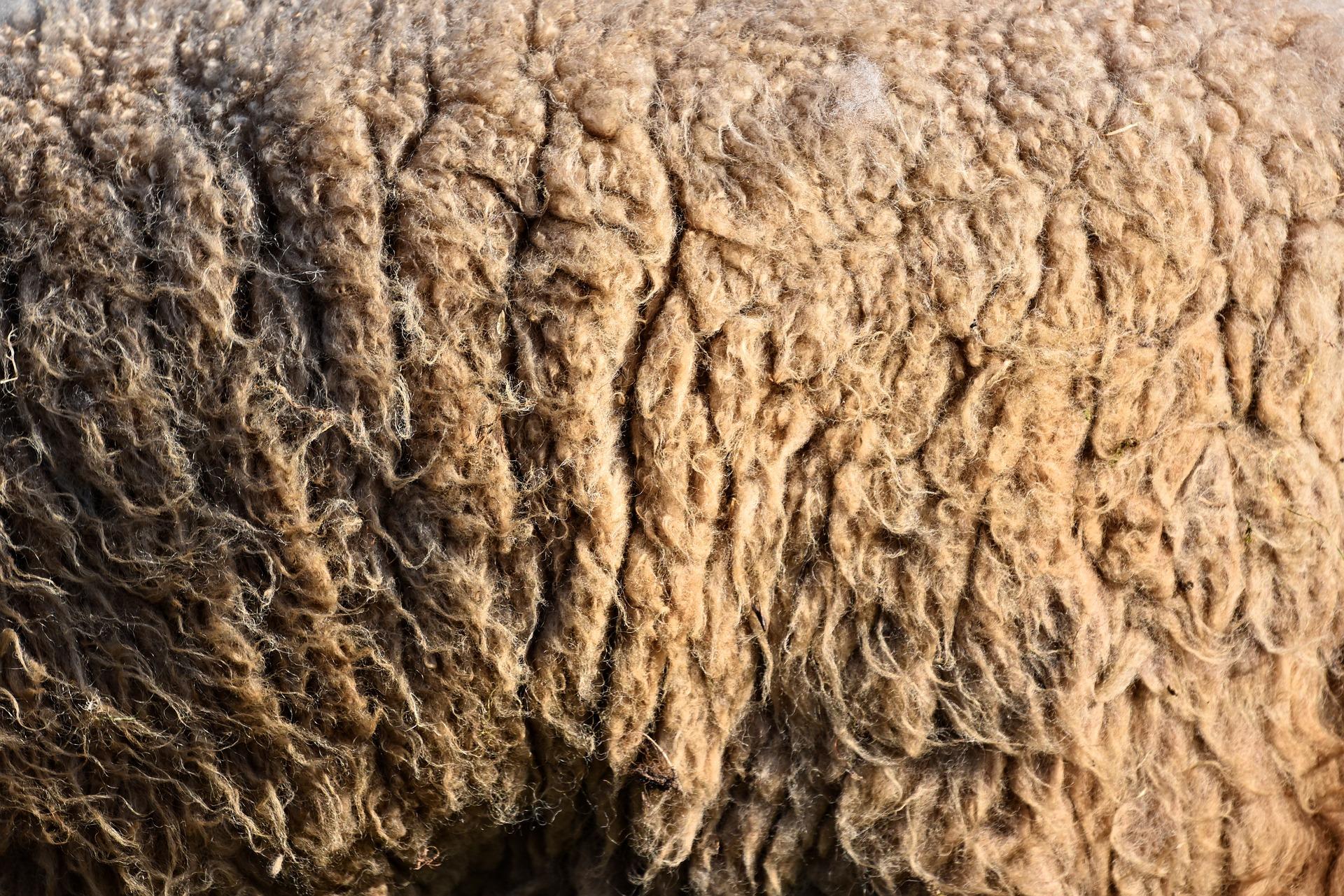 wool-3261353-1920.jpg
