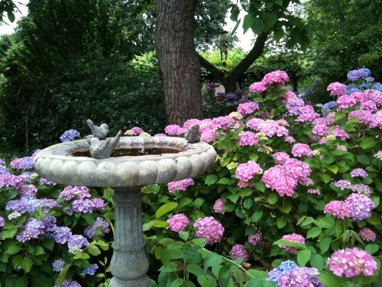 7.20.2011-hydrangea-garden.1.jpg