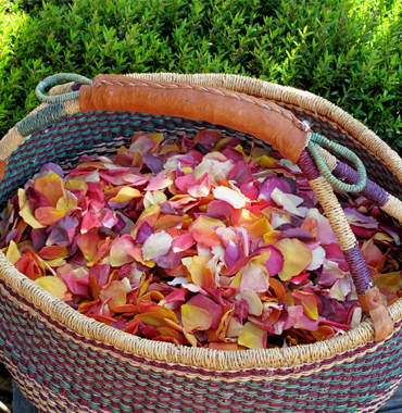 Rose Petals Wedding Petals Eco Friendly Freeze Dried Petals