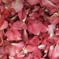 """BB"" Passionate Pink Preserved Freeze Dried Rose Petals"