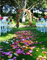 Assorted Rose Petal Aisle & Arch