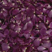 Ultra Violet Preserved Freeze Dried Rose Petals