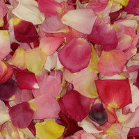 Bright Blend Preserved Freeze Dried Rose Petals