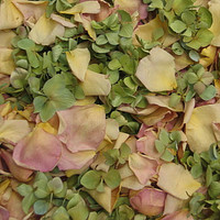Citrus Tease Preserved Freeze Dried Rose & Hydrangea Petals