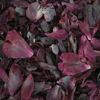 """BB"" Deep Preserved Freeze Dried Peony Petals"