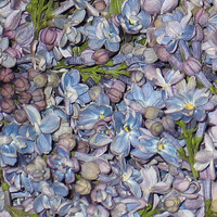 Unique Flower Petals & Blends: Periwinkle Preserved Freeze Dried Lilac Petals