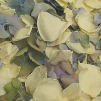 Ivory Preserved Freeze Dried Rose & Hydrangea Petals