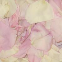 Ivory Bridal Pink Preserved Freeze Dried Rose Petal Blend