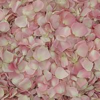 Lydia Petite Pink Preserved Freeze Dried Rose Petals