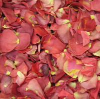 """""""BB"""" Hot-N-Spicy Preserved Freeze Dried Rose Petals"""
