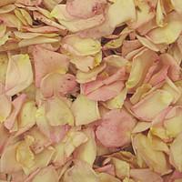 """""""BB"""" Pale Bridal Pink Petals"""