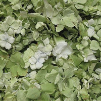 GREEN Preserved Freeze Dried Hydrangea Petals